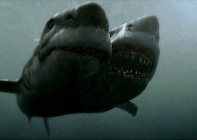 2 headed shark attack 1