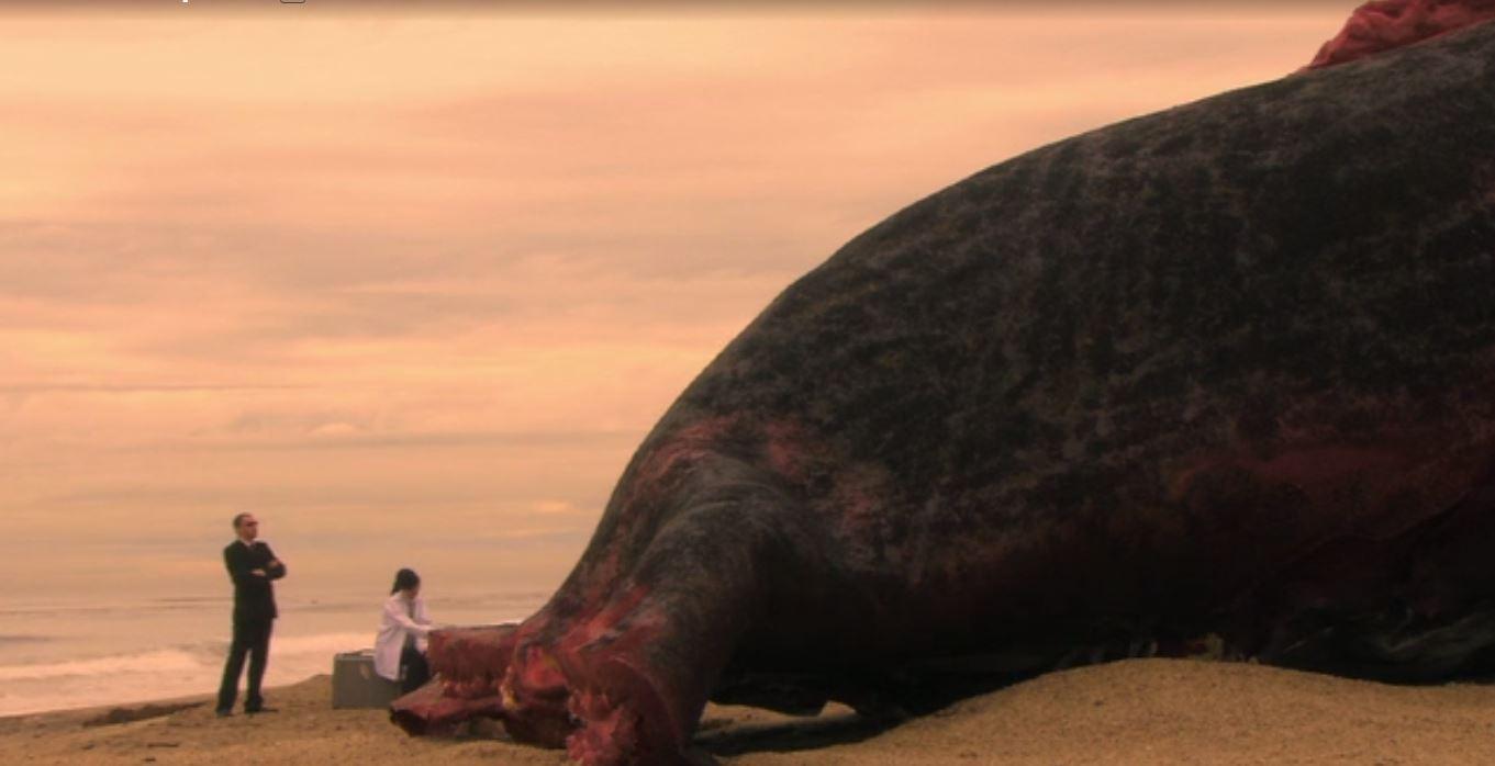 mega shark vs giant octopus international